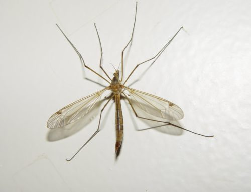Malaria, is the end in sight?